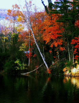 Trees of heaven, North Carolina - image #287241 gratis