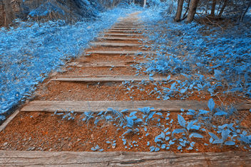 Blue Forest Trail - HDR - Free image #287581