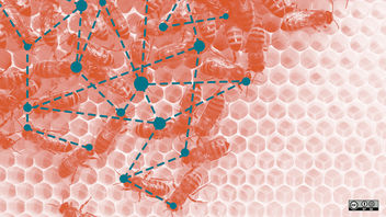 Network of bees - image gratuit #287821