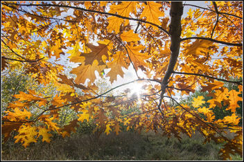 Autumn Sunset - Free image #289881