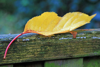 Autumn leave - image #290131 gratis