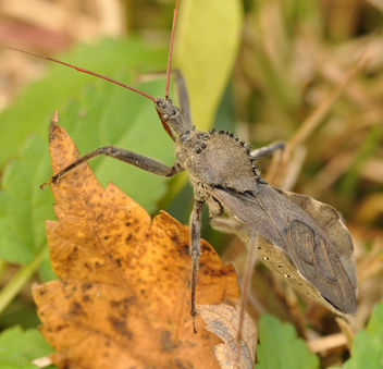 Assassin Bug - Free image #290171