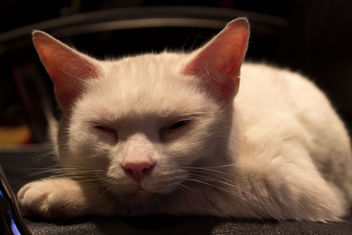 Good luck cat having a rest - image gratuit #290401