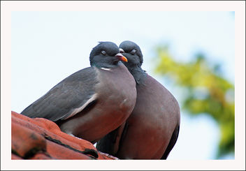 A lovely couple - Free image #290601