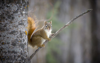 Proud Squirrel - image #291191 gratis