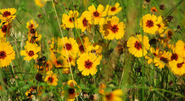 Field of Flowers - Free image #292661