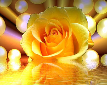 Yellow Beauty - image #292971 gratis