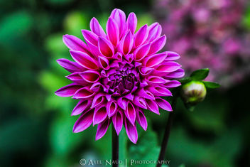 Purple flower - image #293371 gratis