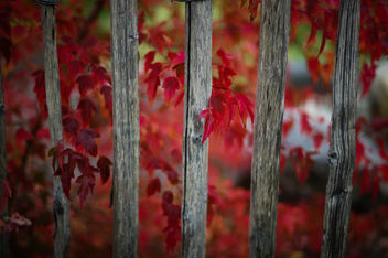 Red Leaves - image #293711 gratis