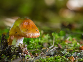 Little fella in the woods. - Kostenloses image #293851