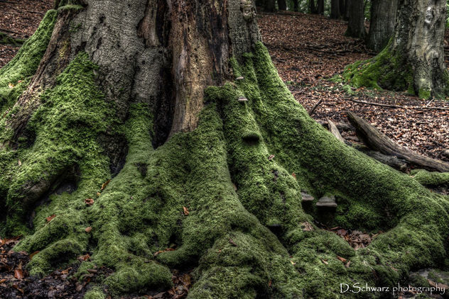 Strong roots - image #293951 gratis