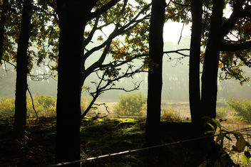 Fog through trees - image gratuit #294551