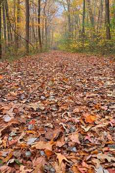 Fall Ferry Grove Trail - HDR - Free image #294761