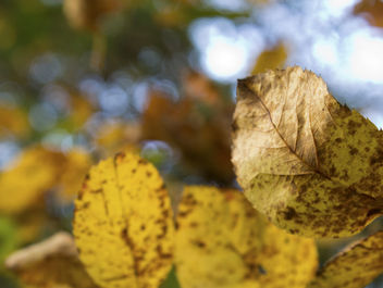 Fall leaves - Free image #294941