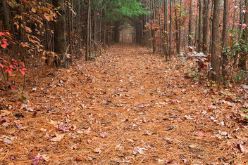 North Point Pine Trail - image #294981 gratis