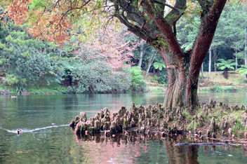Growing in water, this tree has developed extensive aerial roots. - image gratuit #295041