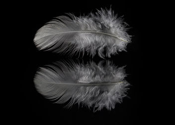 White Feather: Moon Blessings [Explored] - Free image #296361