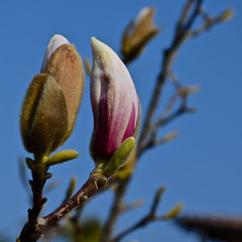 Spring is incoming.. in my garden too! - Free image #296691