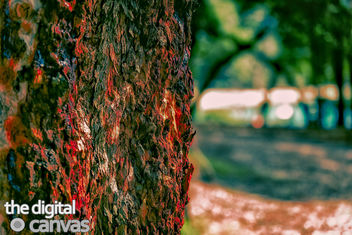 tree-bark - image #296991 gratis