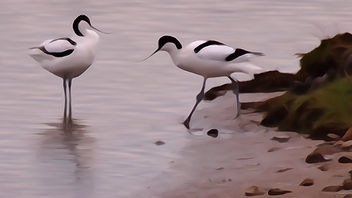 Avocets at Marshside RSPB Soutport. I clicked the paint effect on my HX50 camera to see what would happen - image gratuit #297121