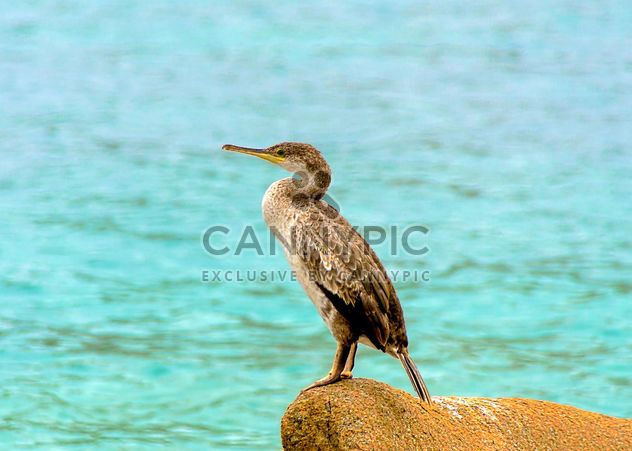 Cormorant on the stone at the sea - Free image #297501