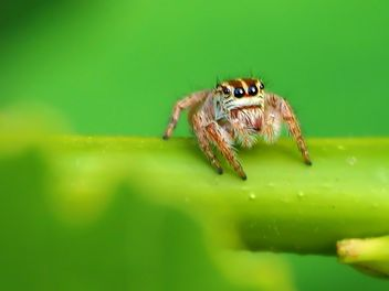 Spider on a leaf - image gratuit #297601