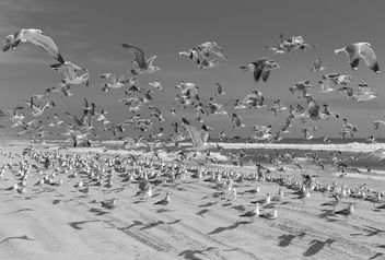 The Birds - image gratuit #298441