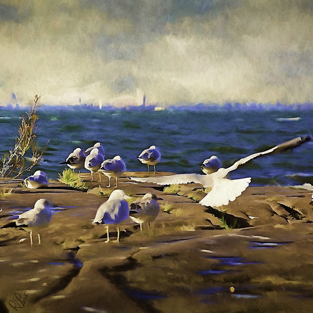 A Gulls Life - Kostenloses image #298821