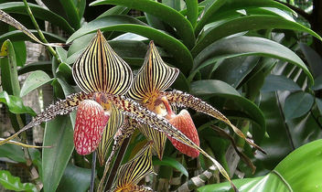 Singapore-National orchid garden 12 - Free image #299101
