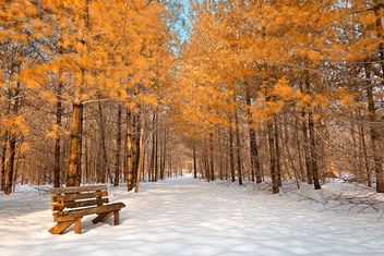 Gold Winter Pine Trail - HDR - image #300061 gratis