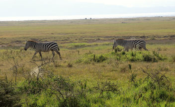 Kenya (Nakuru National Park) Time for going to the water hole - image #300231 gratis
