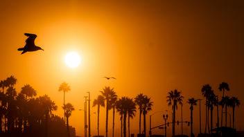 Huntington Beach Sunrise - Kostenloses image #300711
