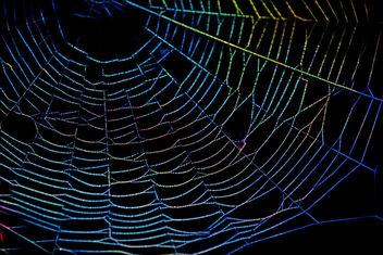The spider web - Free image #300971