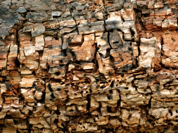 beetle n time wrecked tree - Free image #300981