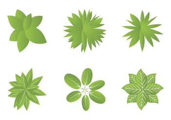 Free Plant top view Vector Illustrations - Free vector #301531