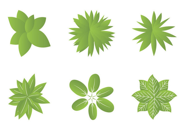 Free Plant top view Vector Illustrations - Kostenloses vector #301531