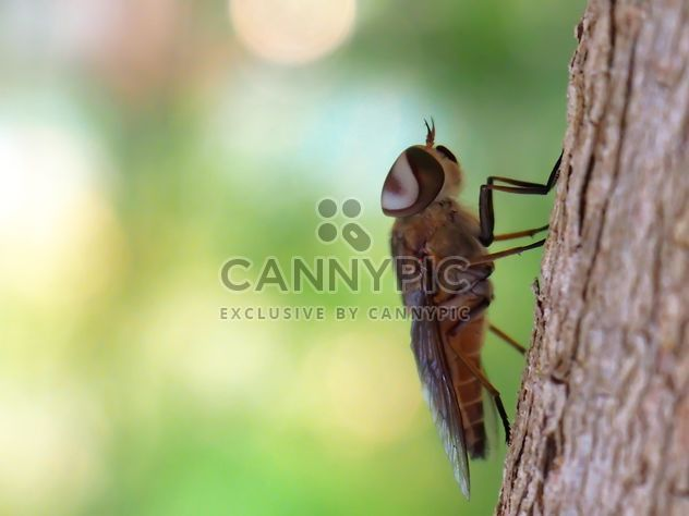 Grey fly on a tree - image #301721 gratis