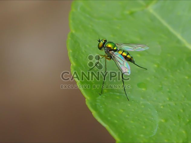 Green fly on a leaf - Free image #301741