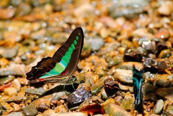 Close-up of butterflies on stones - Free image #303781