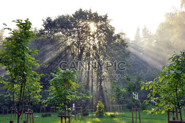 Forest in the summer sun - image gratuit #303951
