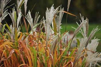 withered grass in focus sunlight - image #303991 gratis