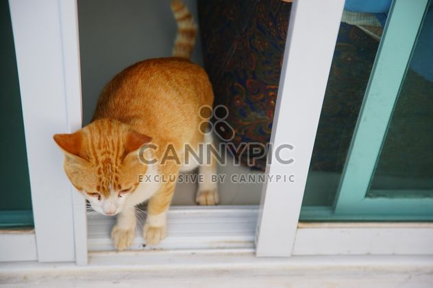 red cat takes a morning walk - Free image #304031
