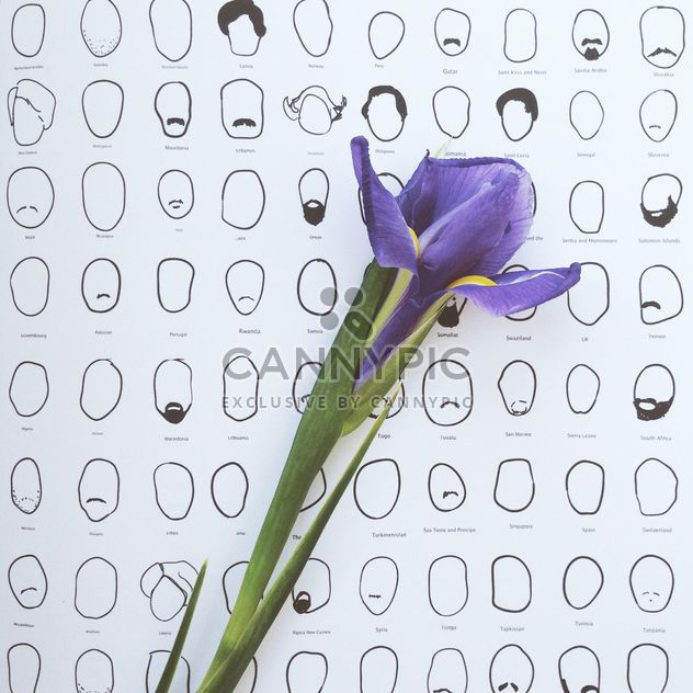 iris flower on white background with doodles - image gratuit #304121