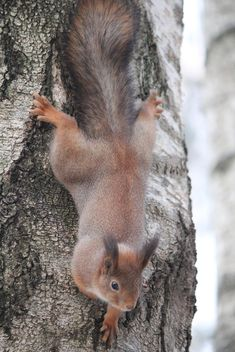Cute squirrel on tree - image #304361 gratis