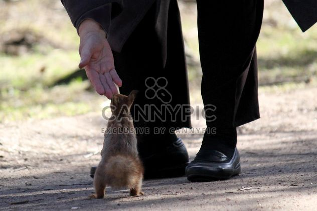 A man feeds a squirrel - бесплатный image #304501