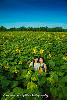 lost in the sun flowers - image #307281 gratis
