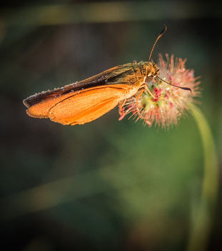 Moth is covered with dew. - image #307361 gratis