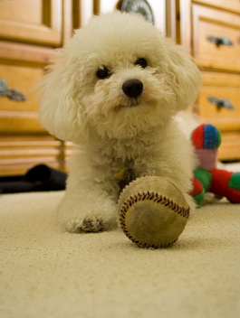 I love my ball... - image gratuit #307841