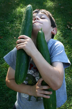 harvest: enormous cucumber - бесплатный image #308501