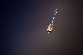 Flying dragonfly - image #309821 gratis